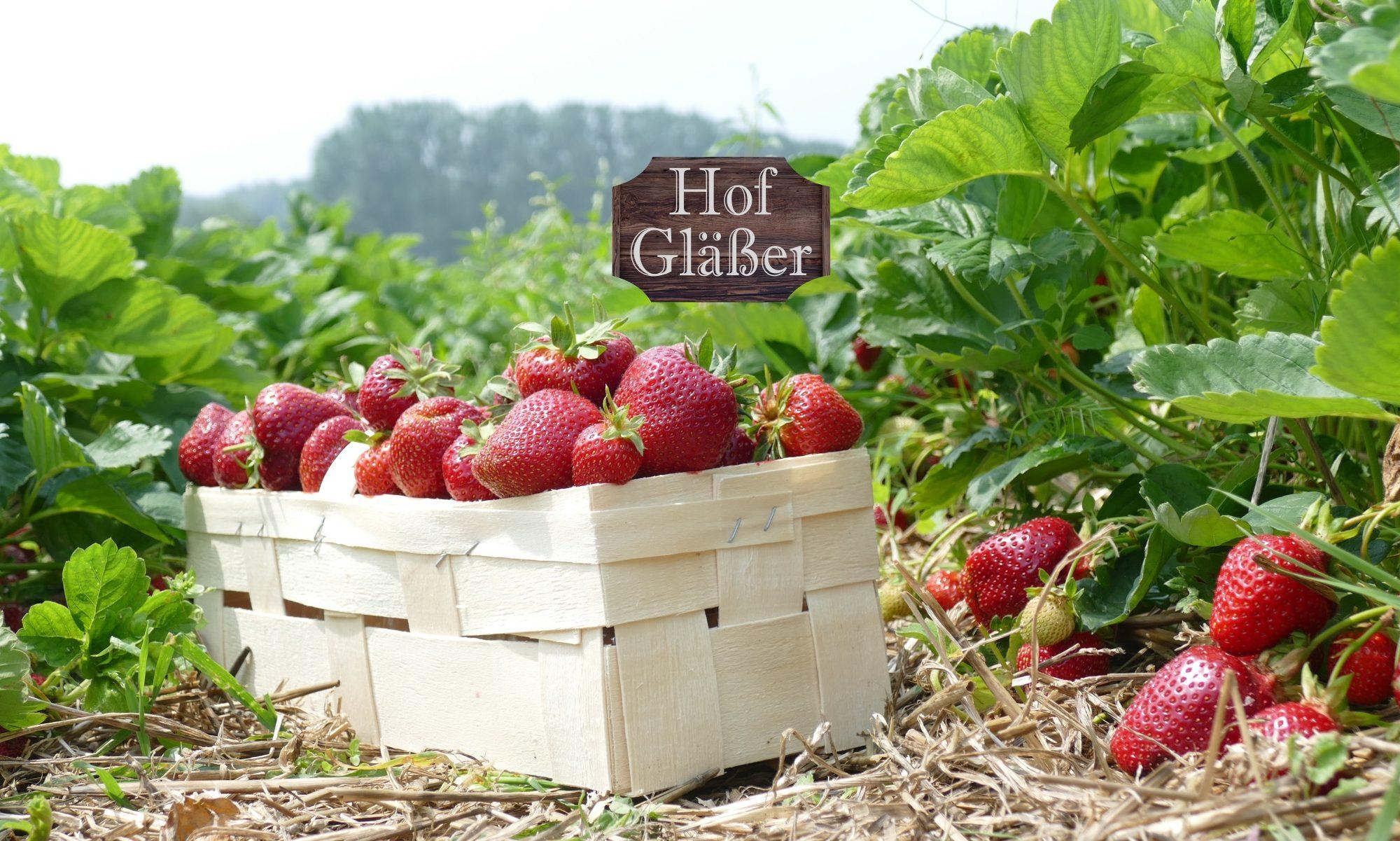 Erdbeeren aus dem Westerwald
